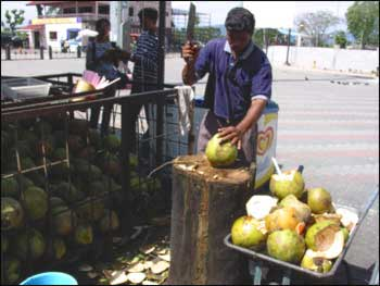 Opening the young green coconut